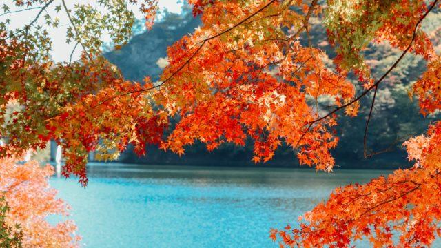 紅葉 湖 山
