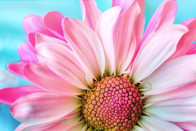 花 ピンク