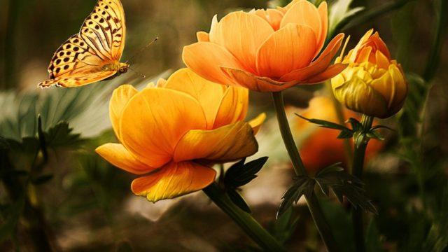 オレンジ 花 蝶