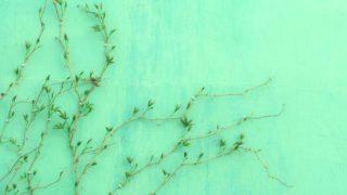 緑 グリーン 植物